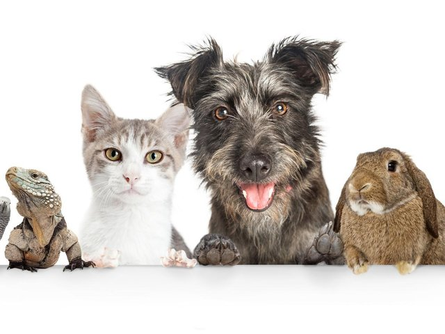 Here's how to enter our Top Pet competition and win a prize worth £50
