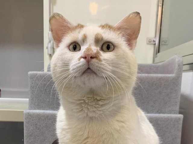 All funds raised will go directly to the Wade Street Animal Centre, helping cats like Rusty to find a new home.