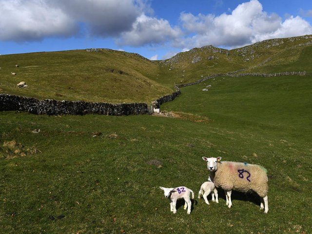 A number of sheep worrying incidents have been reported in Calderdale
