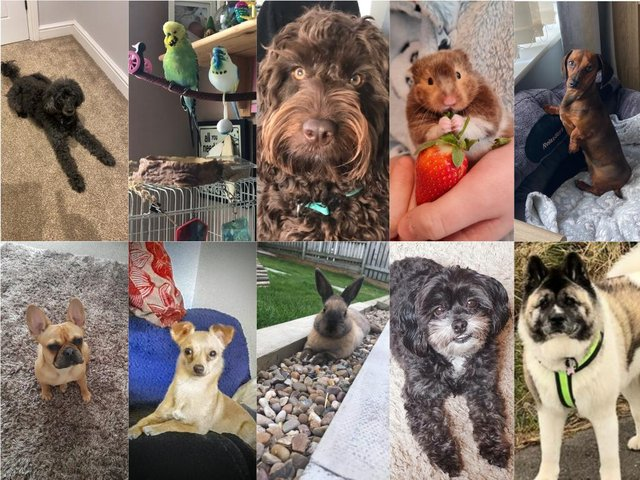 Revealed: Our Top Pet competition shortlist - watch them in action and vote now for your favourite