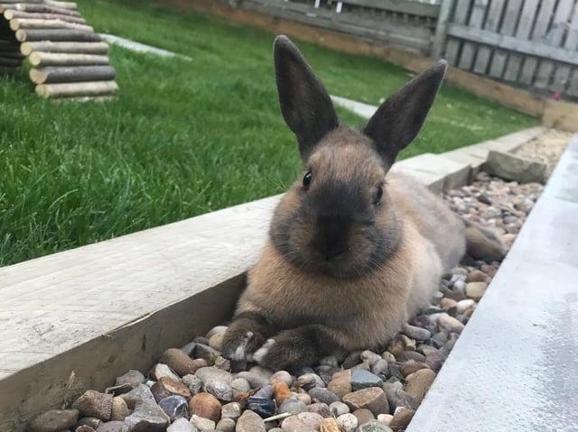 Oreo the rabbit