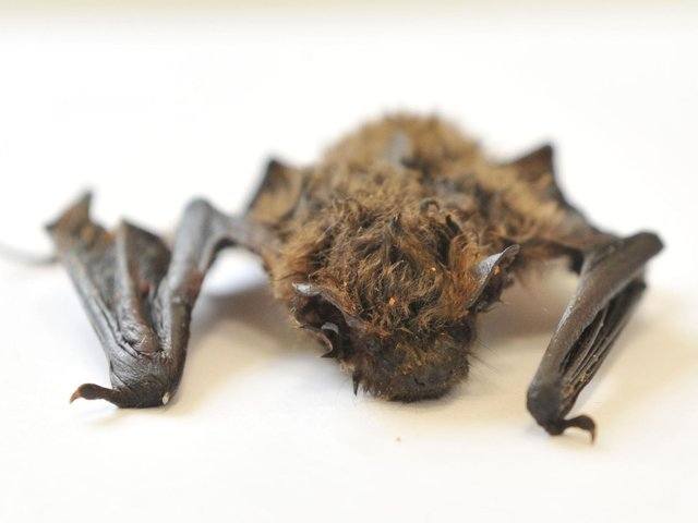 A bat roost must be incorporated into an approved extension