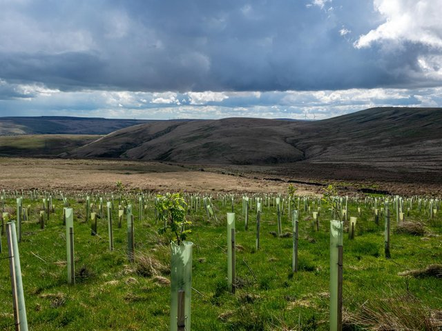 Over 100,000 new trees were planted at Gorpley Reservoir as part of an ambitious project to reduce flood risk. Credit: National Trust Victoria Holland