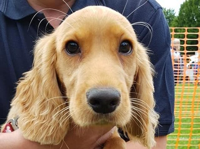 Halifax RSPCA to hold first fun dog show this July in over 18 months